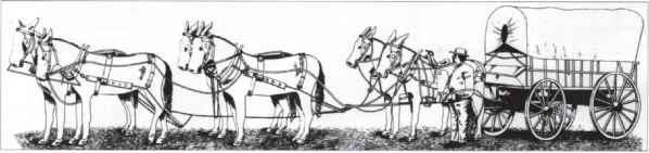 Horses Saddlery - Historical Society - Mine Creek Battlefield